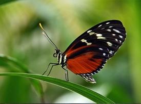 پارک پروانه های کوالالامپور مالزی